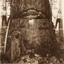 Кешалии и три дровосека