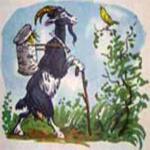 Нет козы с орехами