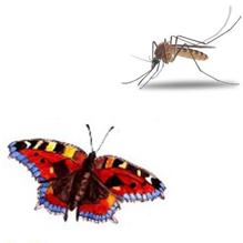 Бабочка и Комар