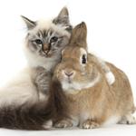Кошка и заяц
