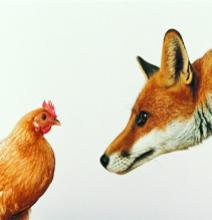 Лиса и курица