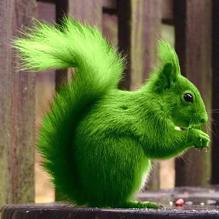 Рори и Зелёная белочка