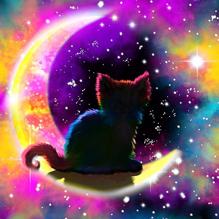 Звёздный кот
